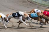 Curse de caini – Cum pariezi, Strategii, Sfaturi Specialiști